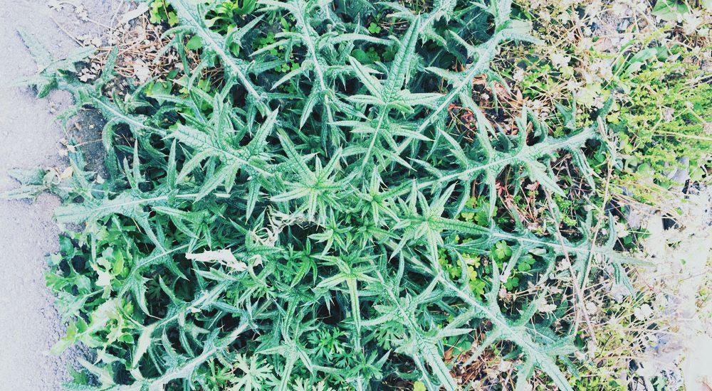 植物 自然 モチーフ ヒント