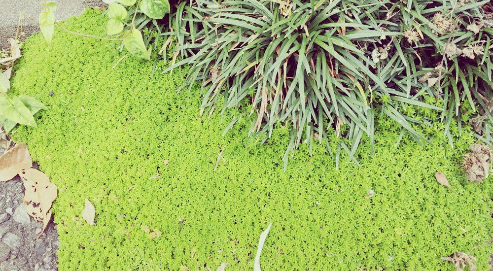 植物 近所