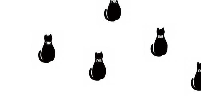 猫の絵TNR